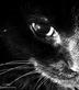 black_cat_by_moonbeam138892.jpg