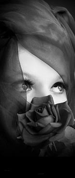 black_rose_by_munecaa2124.jpg