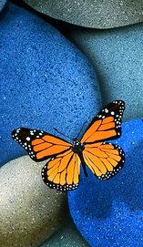 ikona blue_stones_and_butterfly_by_jsalozzo-d46x03u9479.jpg