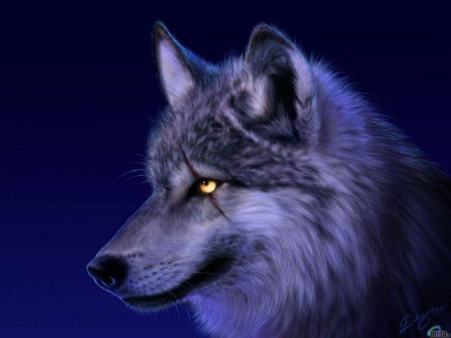 ikona dark-wolf-20-08-2009-18-12-173202.jpg