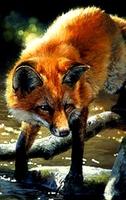 ikona fox7266.jpg