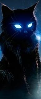 ikona gatito9429.jpg
