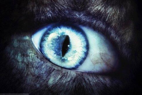 ikona werewolf_by_ntieykodesigns-d38g37j55.png